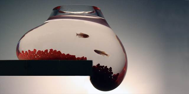 Psalt Design Bubble Tank