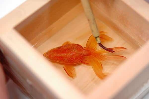 【金魚養画場】深堀隆介の金魚アート